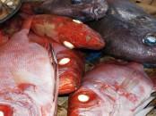 5 Lý do Đàn Ông nên Ăn cá tươi