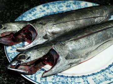 Cá ngừ ồ tươi.