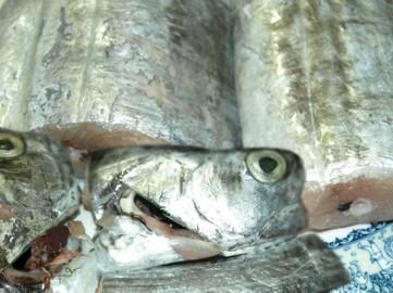 Cá hố